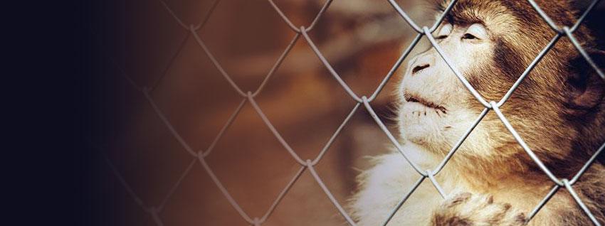 Eläin vankina