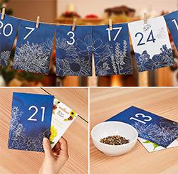 Kasvi joulukalenteri