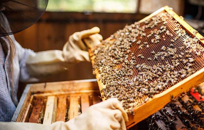 mehiläistuotanto